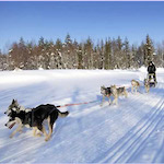Dogsledding in Finland - Outdoor fun in wintry Finland, by Adrienne Wyper