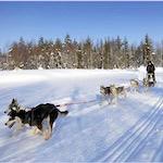 Dogsledding in Finland - Outdoor fun in wintry Finland, by Adrienne Wyper
